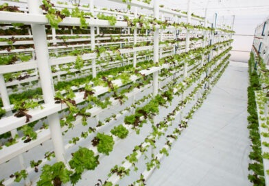 Vertical Farming Market Size Worth USD 12.04 Billion by 2028 | CAGR of 24.8%: Fortune Business Insights